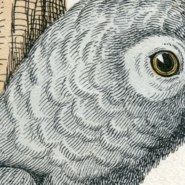 Strange Heartland History: When Andrew Jackson's Parrot Got Kicked Out of His Funeral for Swearing