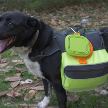 How to Pack a 72-Hour Bug-Out Bag for Your Dog