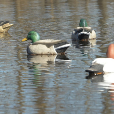 Tips for Placing Duck Decoys